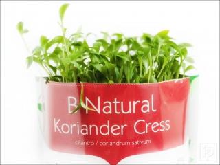 koriander-cress