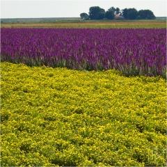 img_4328-viooltjes