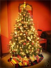 kerstboom-2013