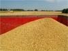 p1000627-gerst-oogst